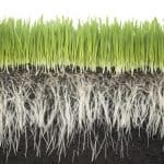 Tips: How To Achieve A Healthy Root System