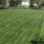 Best Lawn Care Services Near Denver, Colorado