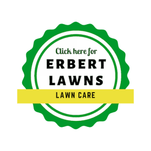How To Avoid Lawn Mite Damage In Littleton Aurora And