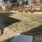 How To Avoid Lawn Mite Damage In Littleton, Aurora and Denver Colorado